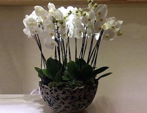 Canlı Çiçeklerin Motivasyonu Etkileyici Yönleri