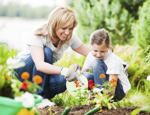 Tatile Giderken Evdeki Bitkilerin Bakımı Nasıl Olmalıdır?